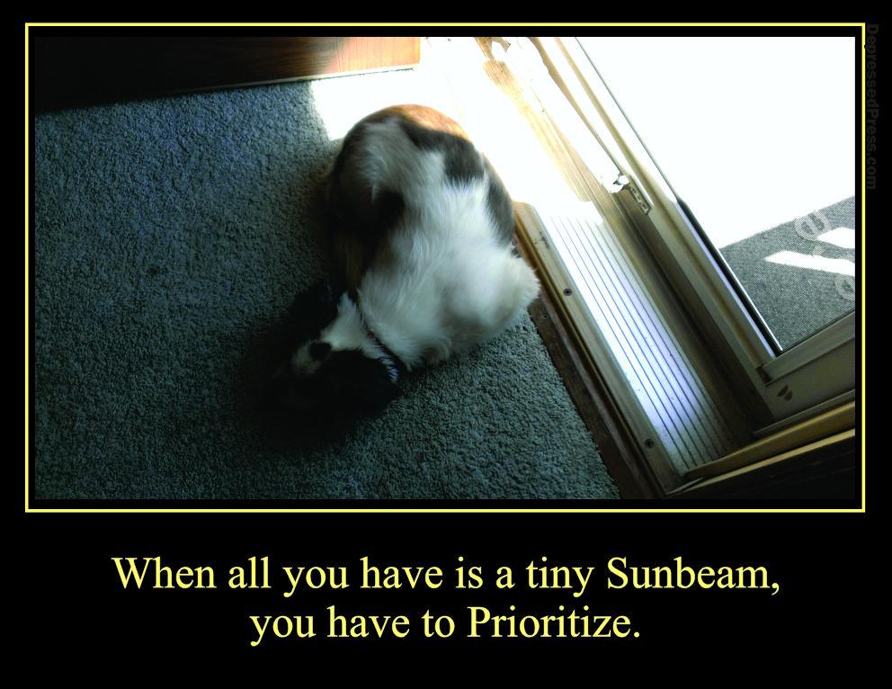 Francie's Sunbeam